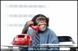 Office Practical Jokes monkey
